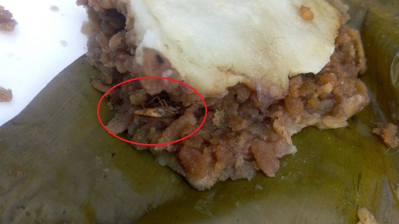 mosquito in food